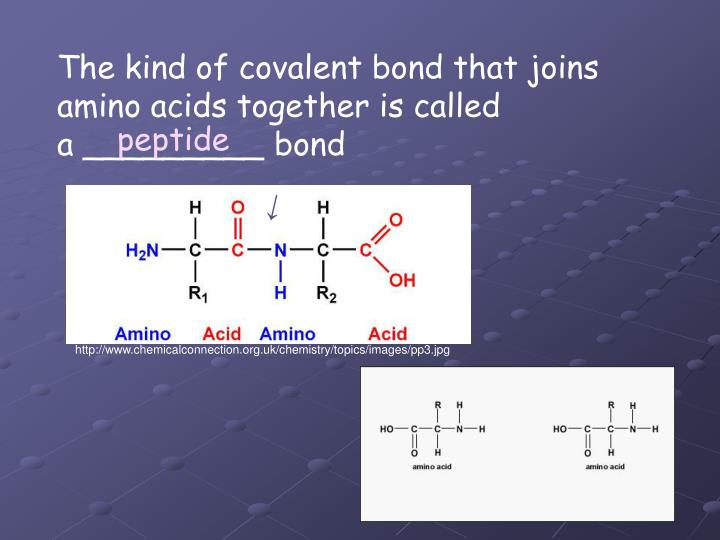 The kind of covalent bond that joins