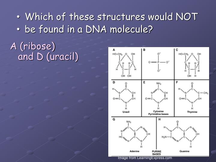 Which of these structures would NOT
