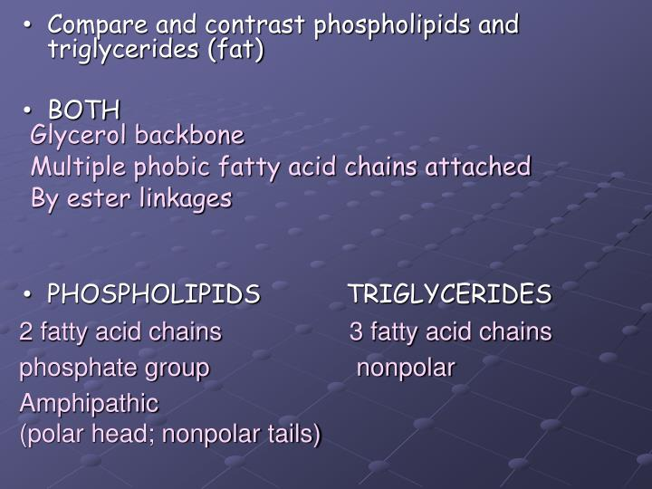 Compare and contrast phospholipids and triglycerides (fat)