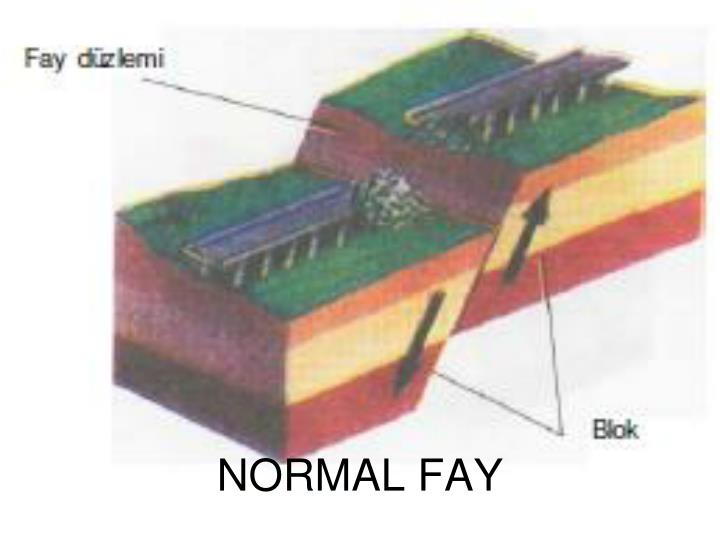 NORMAL FAY