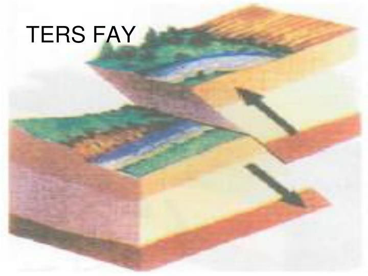 TERS FAY