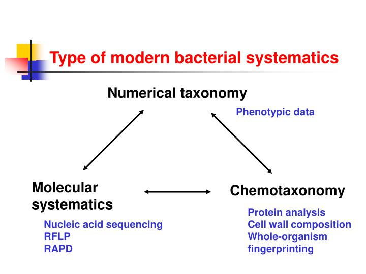 Type of modern bacterial systematics