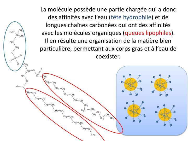 La molécule possède une partie chargée qui a donc des affinités avec l'eau (