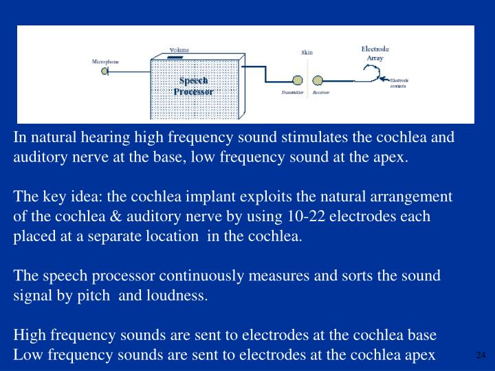 In natural hearing high frequency sound stimulates the cochlea and auditory nerve at the base, low frequency sound at the apex.