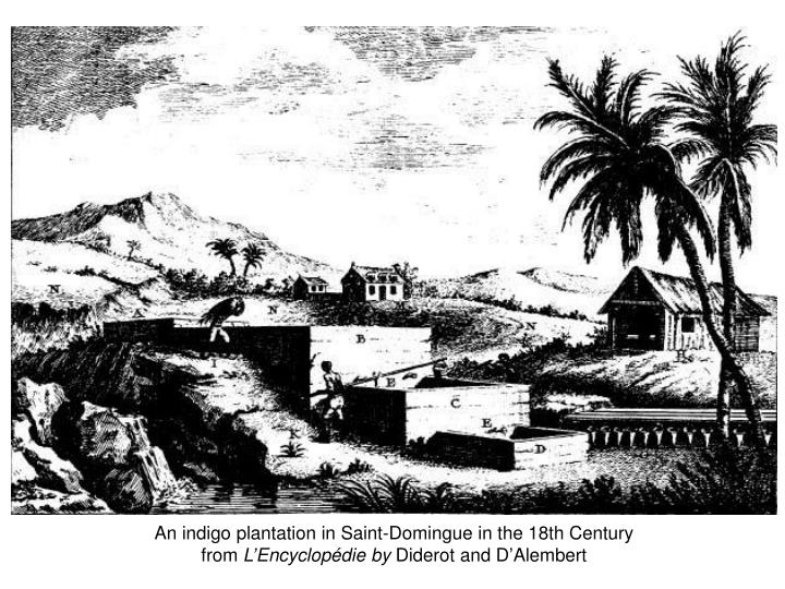 An indigo plantation in Saint-Domingue in the 18th Century