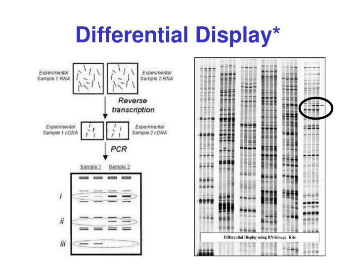 Differential Display*
