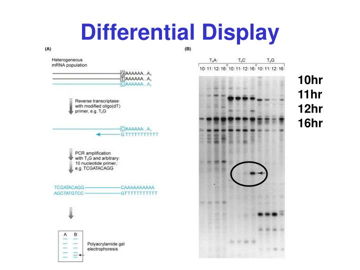 Differential Display