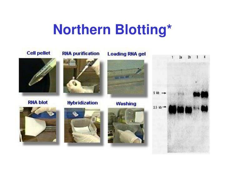 Northern Blotting*