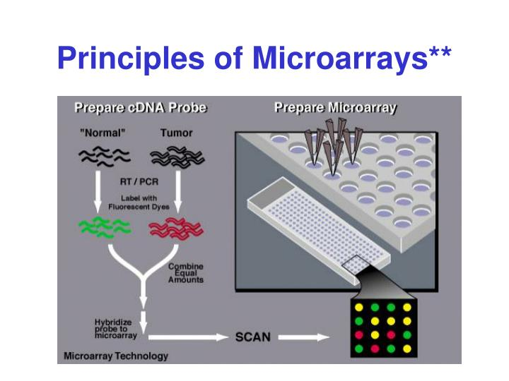 Principles of Microarrays**