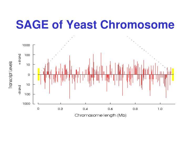 SAGE of Yeast Chromosome