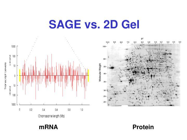 SAGE vs. 2D Gel