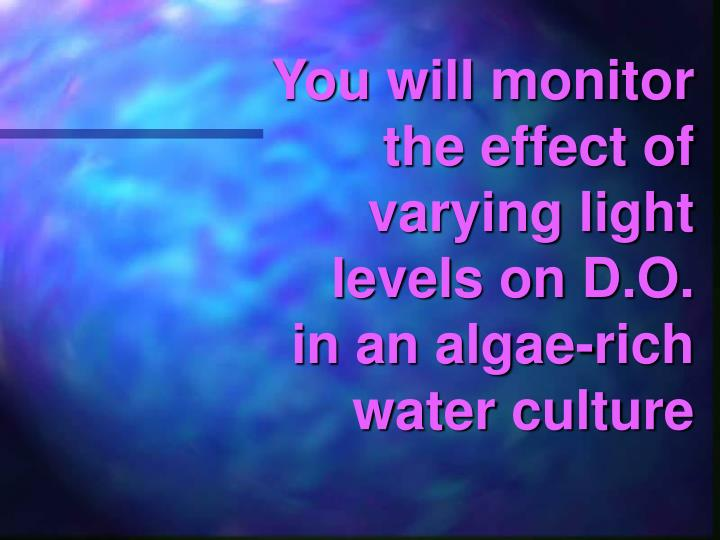 You will monitor the effect of varying light levels on D.O.  in an algae-rich water culture