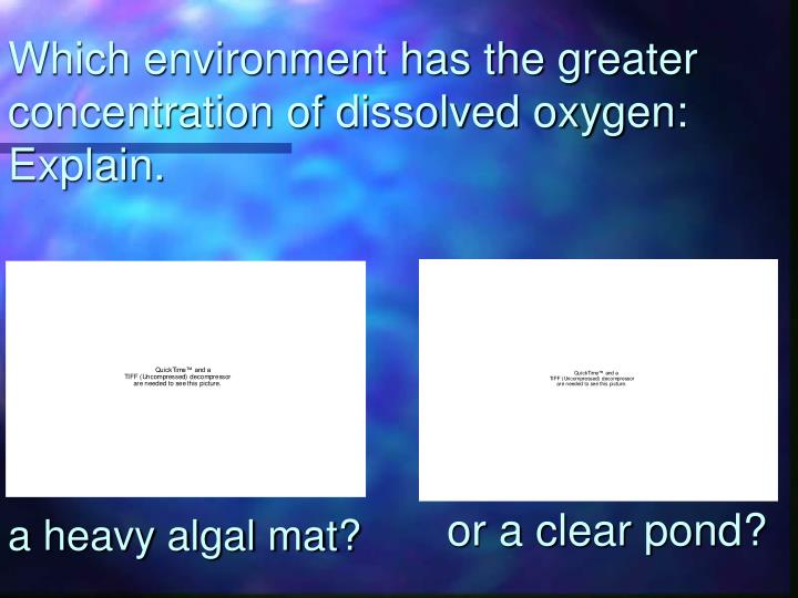 Which environment has the greater concentration of dissolved oxygen: Explain.