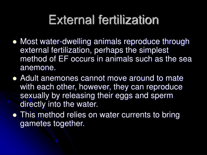 weird tribal porn videos