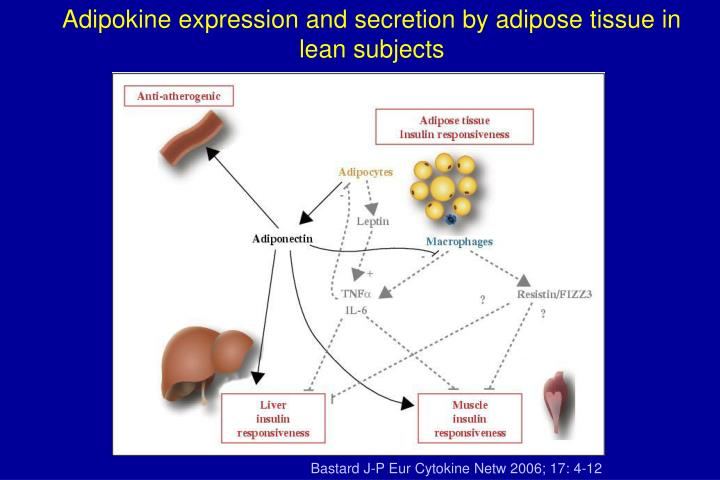 Adipokine expression and secretion by adipose tissue in lean subjects