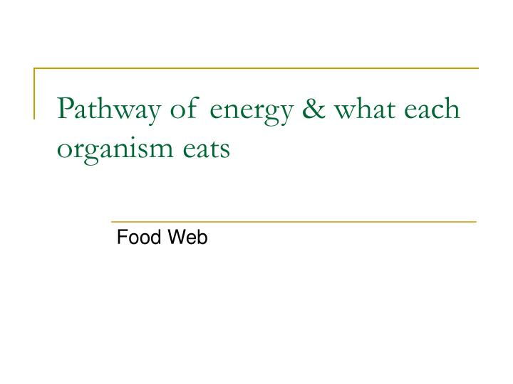 Pathway of energy & what each organism eats