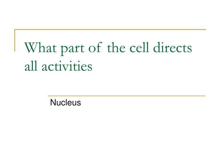 What part of the cell directs all activities