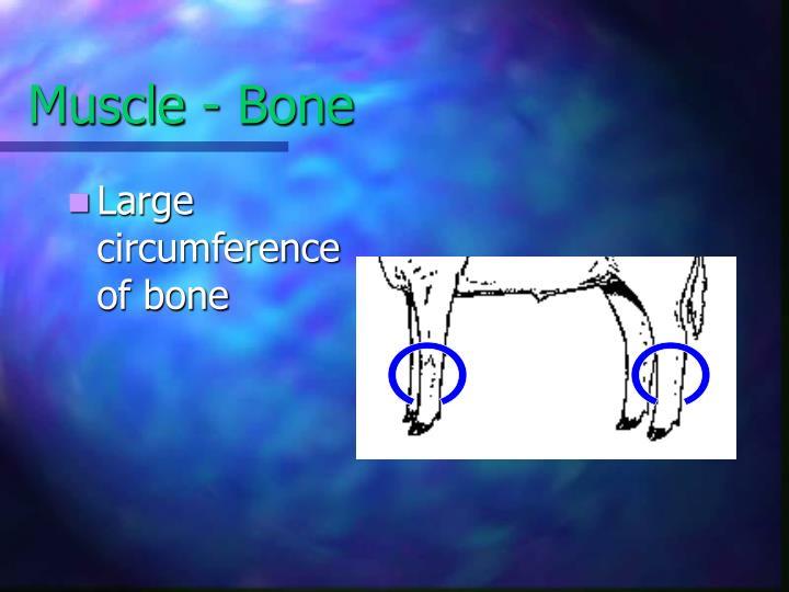 Muscle - Bone