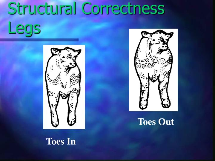 Structural Correctness Legs
