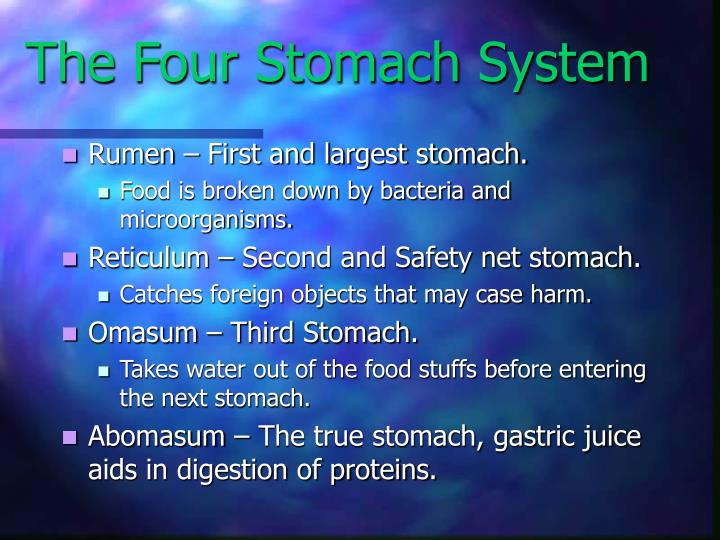 The Four Stomach System