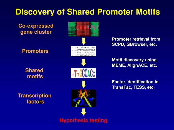 Discovery of Shared Promoter Motifs