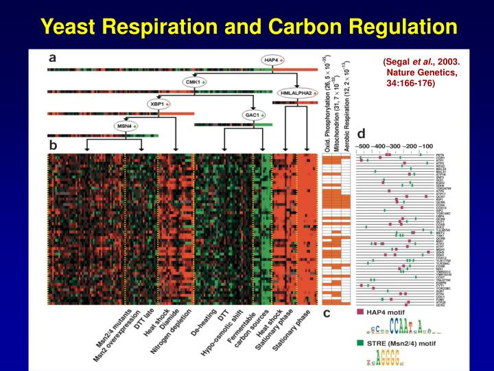 Yeast Respiration and Carbon Regulation