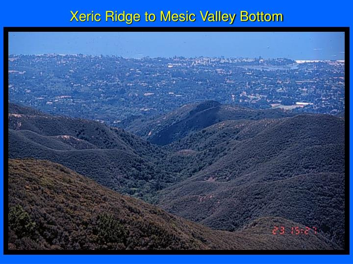 Xeric Ridge to Mesic Valley Bottom