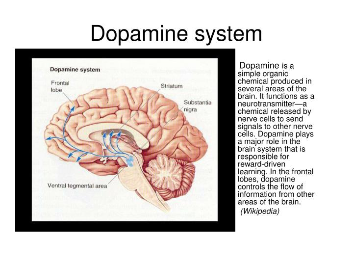 Dopamine system