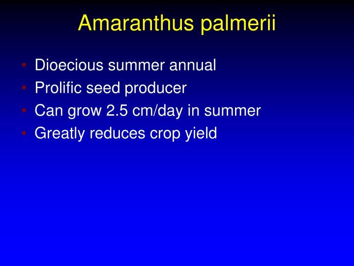 Amaranthus palmerii