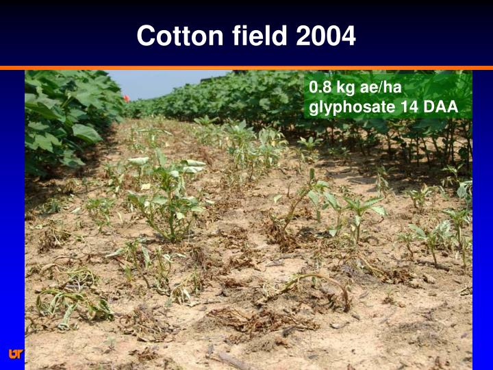 Cotton field 2004