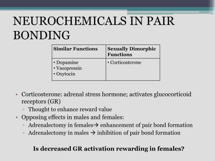 NEUROCHEMICALS IN PAIR BONDING