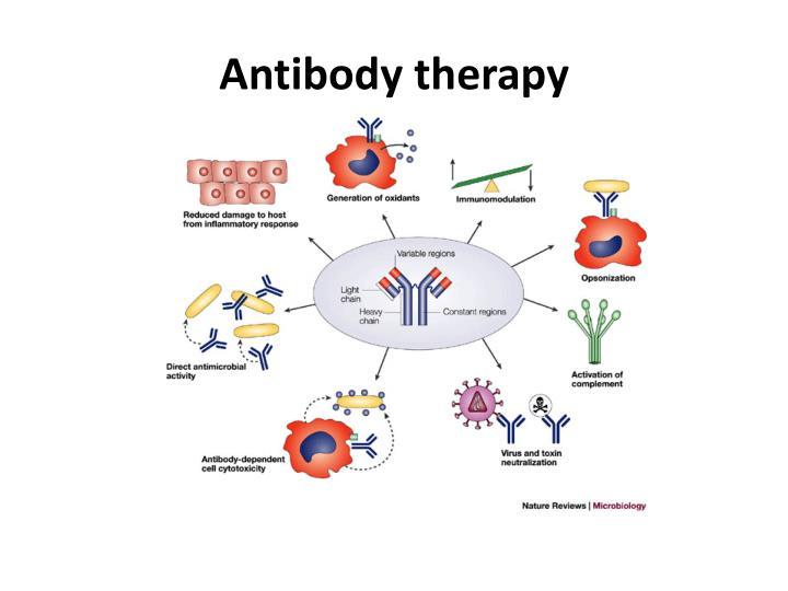 Antibody therapy