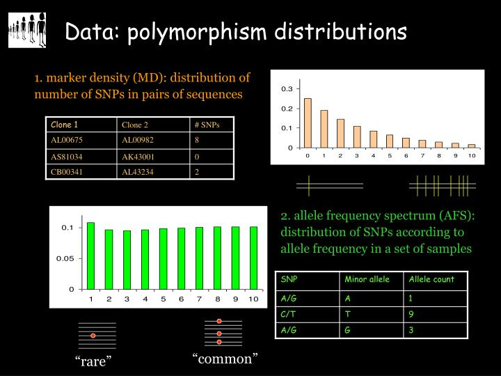 2. allele frequency spectrum (AFS): distribution of SNPs according to allele frequency in a set of samples