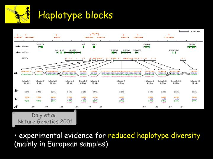 Haplotype blocks