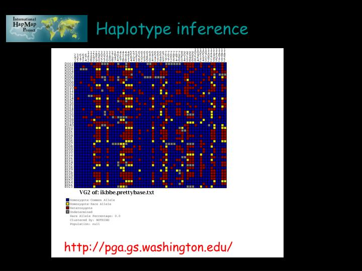 Haplotype inference