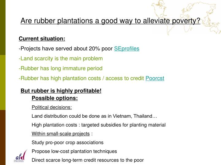 Are rubber plantations a good way to alleviate poverty?