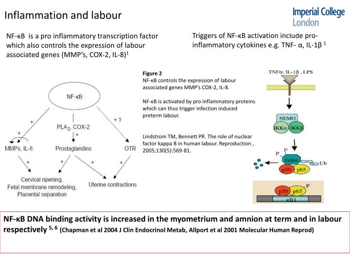 Inflammation and labour