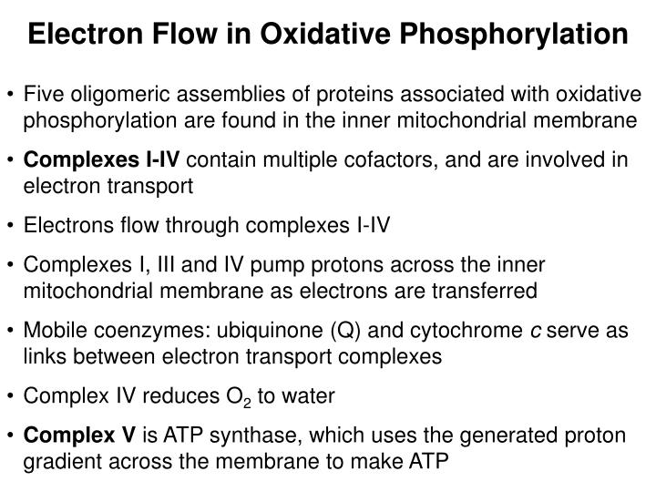 Electron Flow in Oxidative Phosphorylation