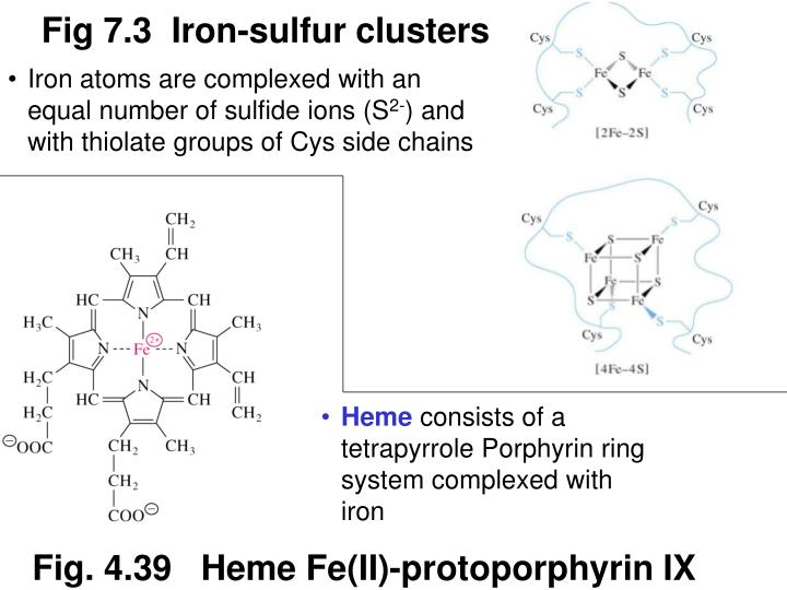 Fig 7.3  Iron-sulfur clusters