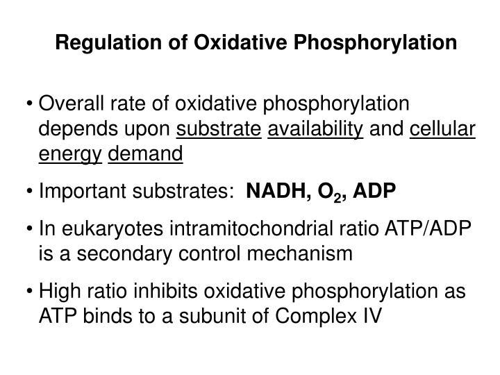 Regulation of Oxidative Phosphorylation