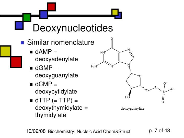 Deoxynucleotides