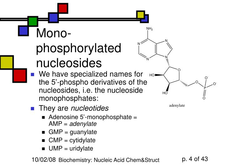 Mono-phosphorylated nucleosides