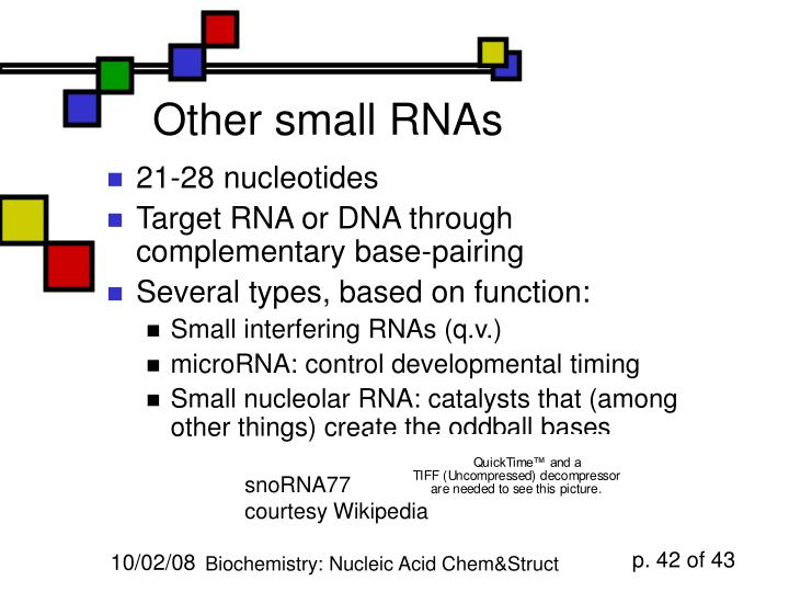 Other small RNAs