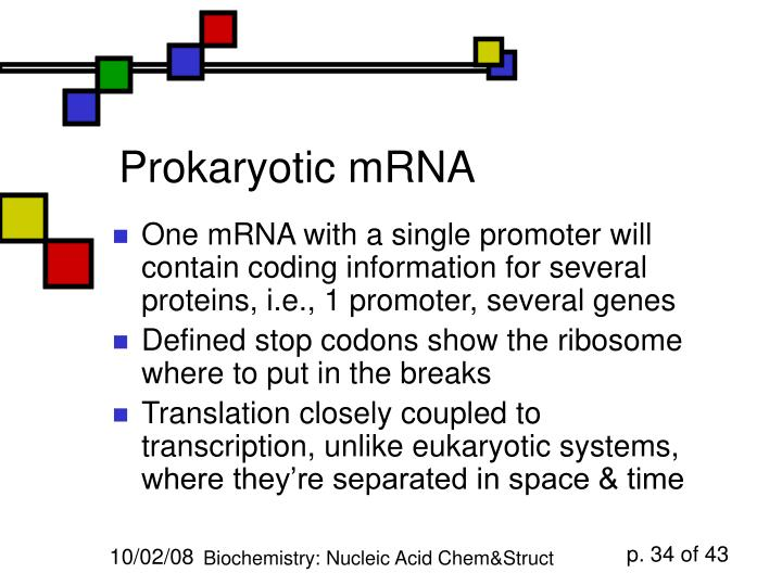 Prokaryotic mRNA