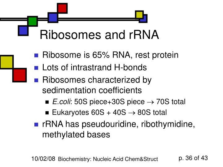 Ribosomes and rRNA