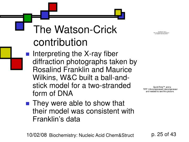 The Watson-Crick contribution