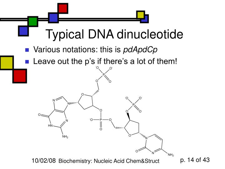 Typical DNA dinucleotide