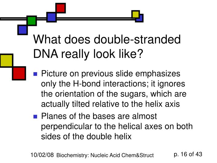 What does double-stranded DNA really look like?