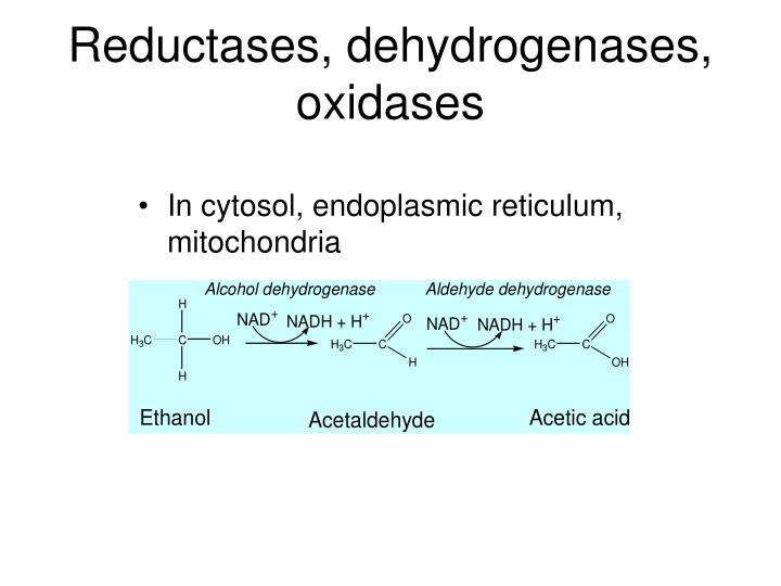 Reductases, dehydrogenases, oxidases