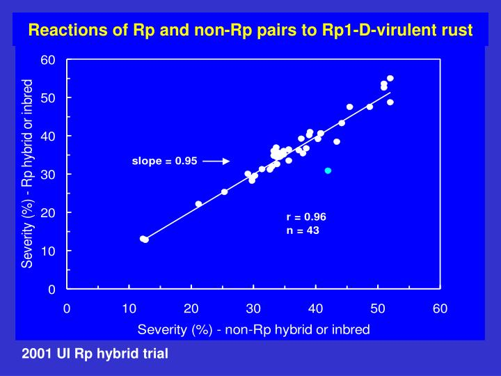 Reactions of Rp and non-Rp pairs to Rp1-D-virulent rust